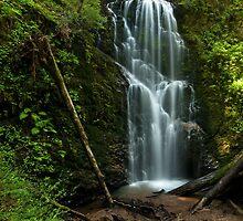 Berry Creek Falls, Big Basin California by Matt Tilghman
