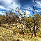 Australian Bush  NSW Australia by Kym Bradley