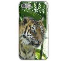 Tiger emerges iPhone Case/Skin
