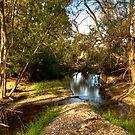 Mountain Creek NSW Australia No 3 by Kym Bradley