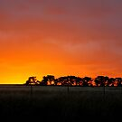 Sunset Murrumbateman  Rural NSW  Australia  by Kym Bradley