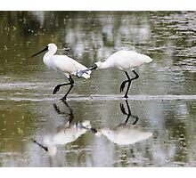 Lovers Tiff  Spoonbills Photographic Print