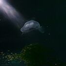 Jelly Fish Dreaming by sedge808