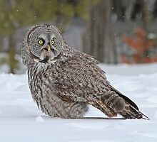 You talking to me? by Heather King