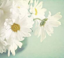 for the love of daisies by kelly ishmael