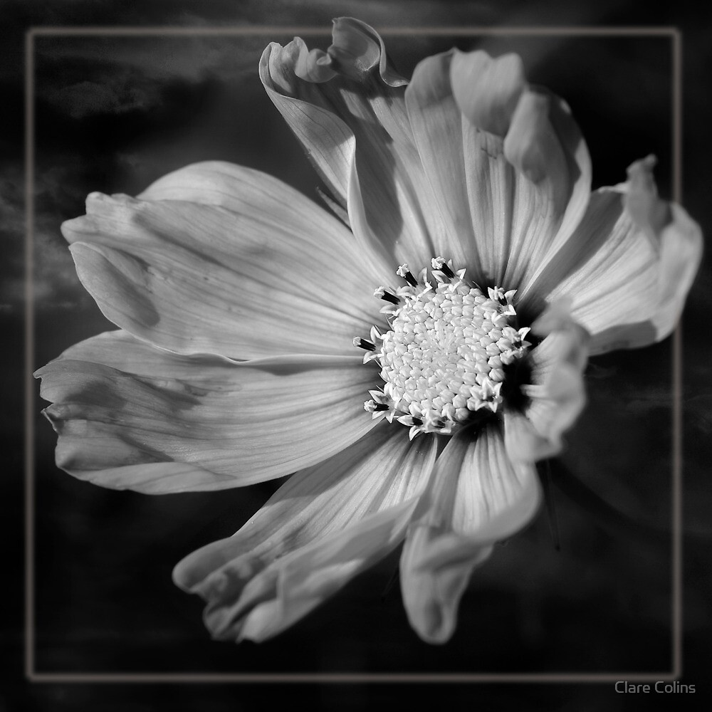Unfurl and reach for the sky by Clare Colins