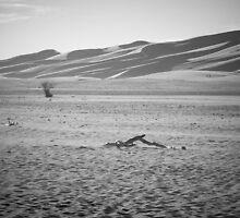 Desolation by Joel Meaders