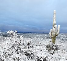 Sonoran Desert Winter Wonderland - 2013 by HDTaylor