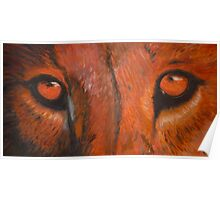 Tiger eyes - oil painting Poster