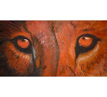 Tiger eyes - oil painting Photographic Print