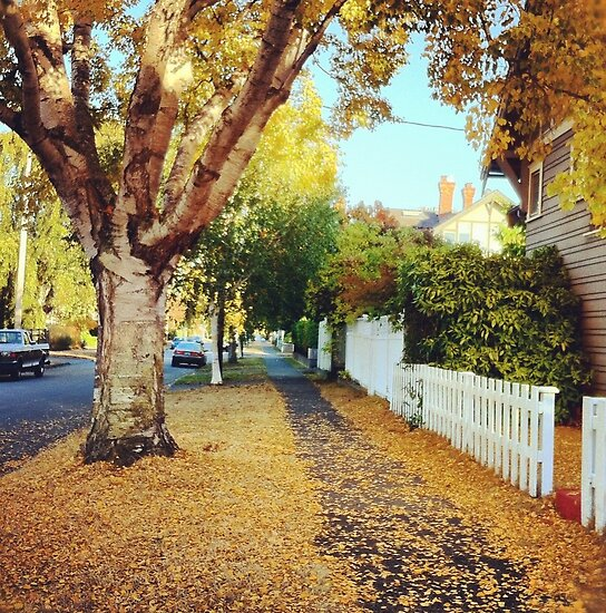 Fall Leaves in Victoria, BC by Nadine Staaf