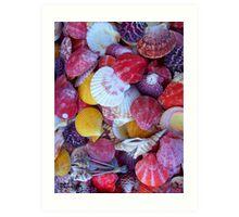 Shells! Art Print