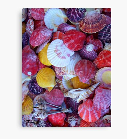 Shells! Canvas Print