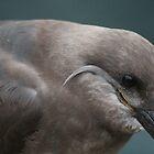 Inca Tern by Cliffyj