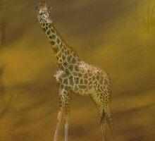 Giraffe  by Catherine Hamilton-Veal  ©