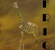 Giraffe Africa by Catherine Hamilton-Veal  ©