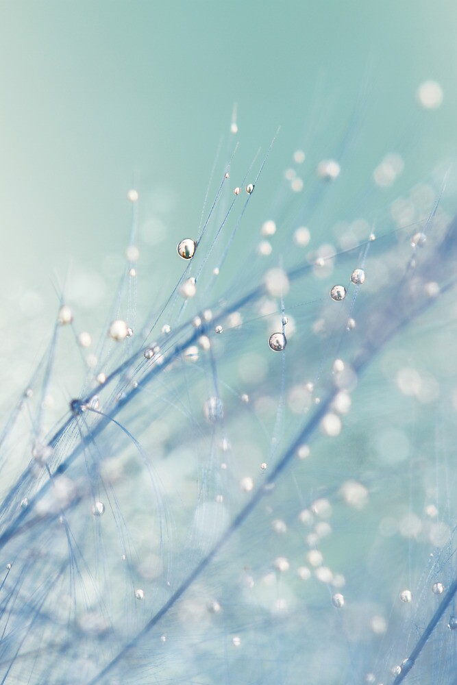 Dreamy Feather Drops by Sharon Johnstone