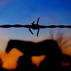 Fenced In by Penny Kittel
