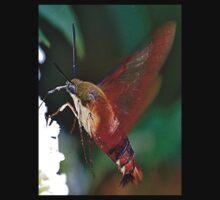 Hummingbird Moth Kids Clothes