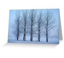 Winter Trees II Greeting Card