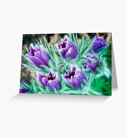 Lush - Pasque Flowers Greeting Card