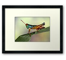Grasshopper from Bali Framed Print
