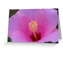 Hibiscus Blossom I Greeting Card