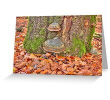 Details of an enchated forest II Greeting Card