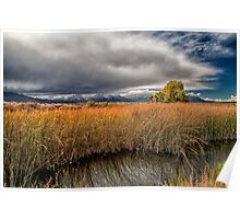Clouds and Reeds Poster