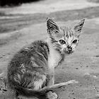 raggedy kitten by HannelePhoto