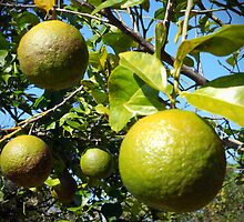 Wild Citrus by designingjudy