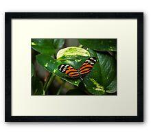 Tiger Orange Butterfly Framed Print