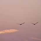 Pelicans Just Coasting Along! by seeingred13