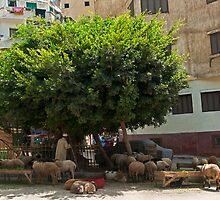 Urban Farm? by bulljup
