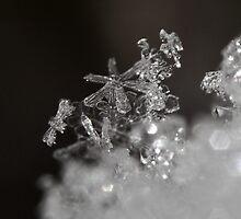 Snowflake macro by Inzaie