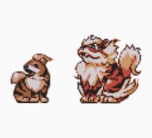 Growlithe evolution  by kyokenbyo