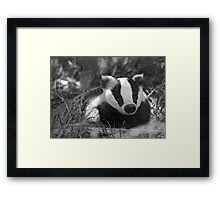 Black & white Badger Framed Print
