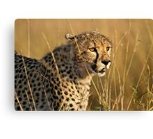 "Polka dotted missile ~ "" Cheetah ""  Canvas Print"