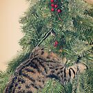 And, a Tabby in a Christmas Tree! by thinkingoutloud