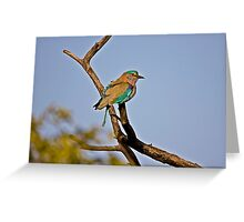 Lilac-breasted Roller (Coracias caudatus) Greeting Card