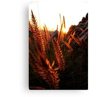 Furry Things 3 Canvas Print