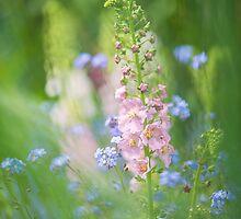 Gentle Enchantment by Sarah-fiona Helme