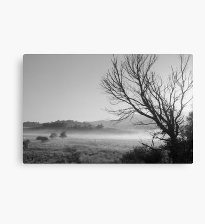 tree in morning mist Canvas Print