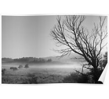 tree in morning mist Poster