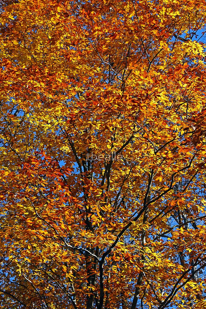 Colors of Change by Terri~Lynn Bealle