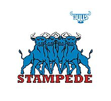BLUE BULLS  STAMPEDE RUGBY Photographic Print