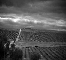 Vineyard in the rain by Lee Hopkins