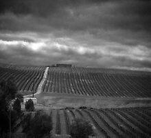 Vineyard in the rain by Lee Hopkins