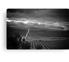 Vineyard in the rain Canvas Print