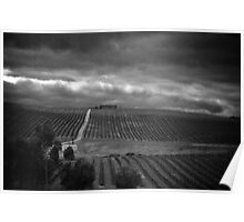 Vineyard in the rain Poster